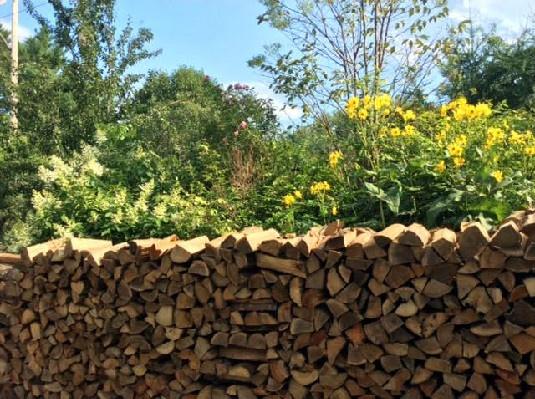 woodpile & fall flowers