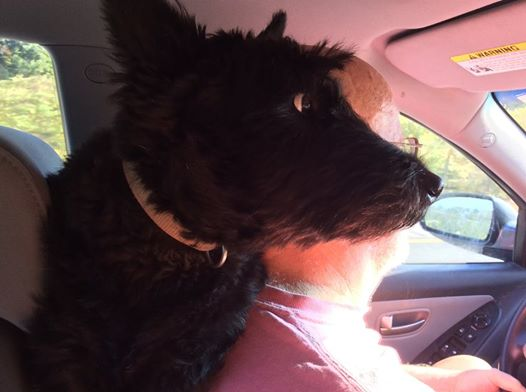 Abigail, My navigator looking over my shoulder