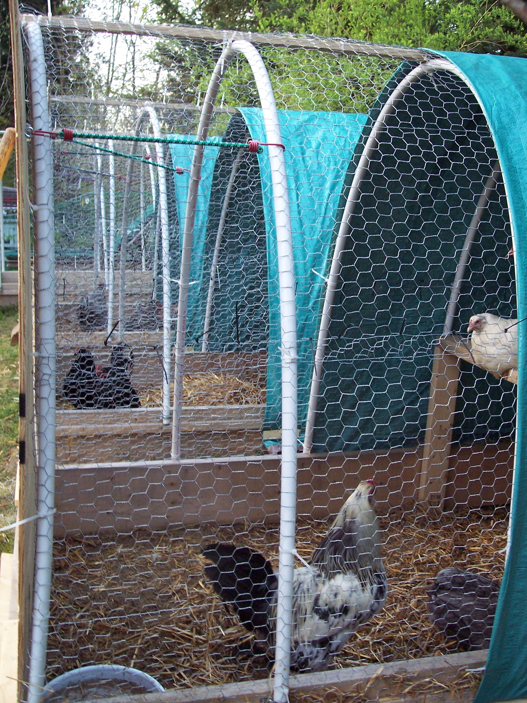 Poultry Breeding Pens | Fayrehale Farm: Gifts, Antiques, Christmas ...