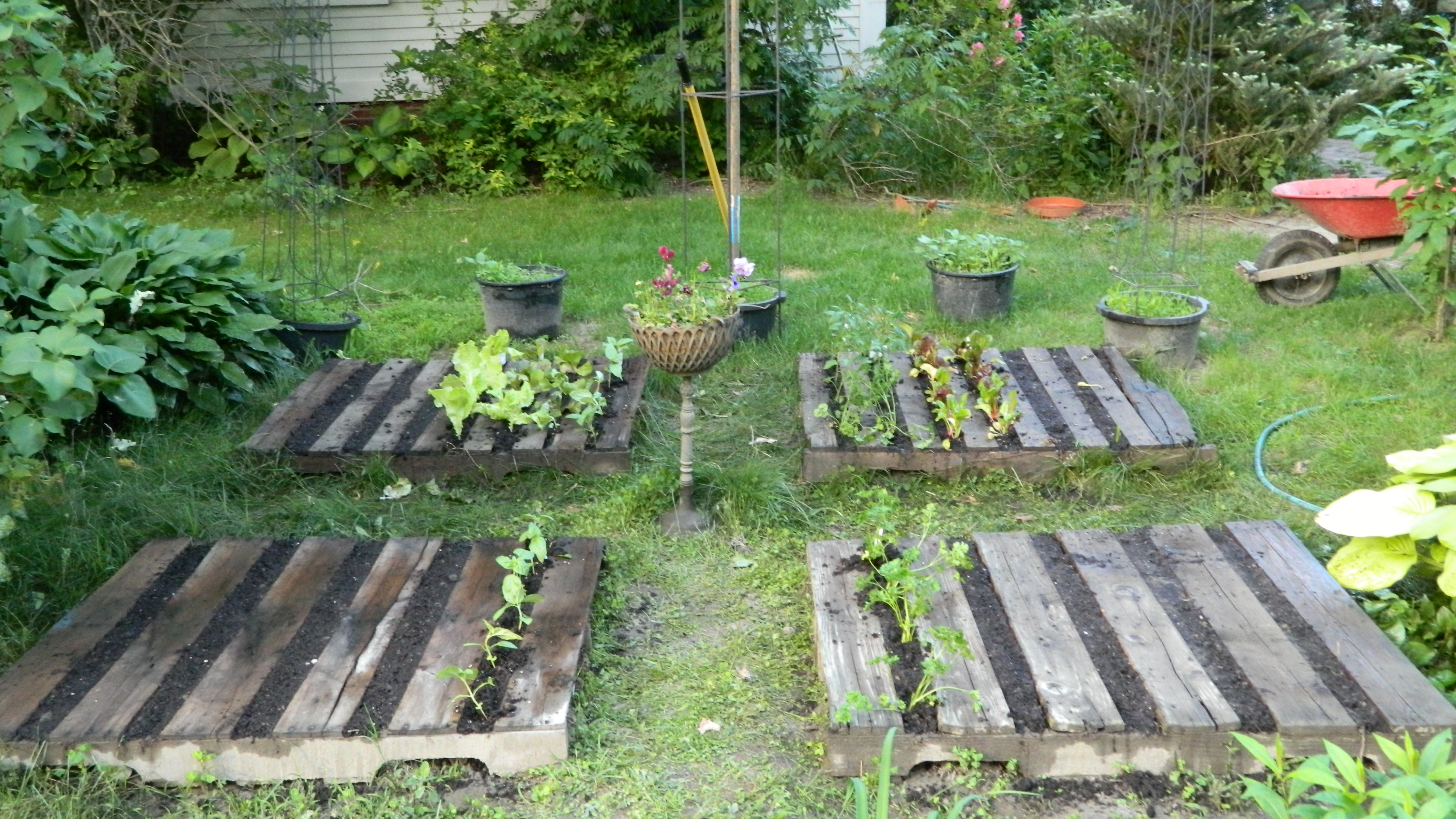 Pallet gardening a great and versatile system for What to grow in a pallet garden