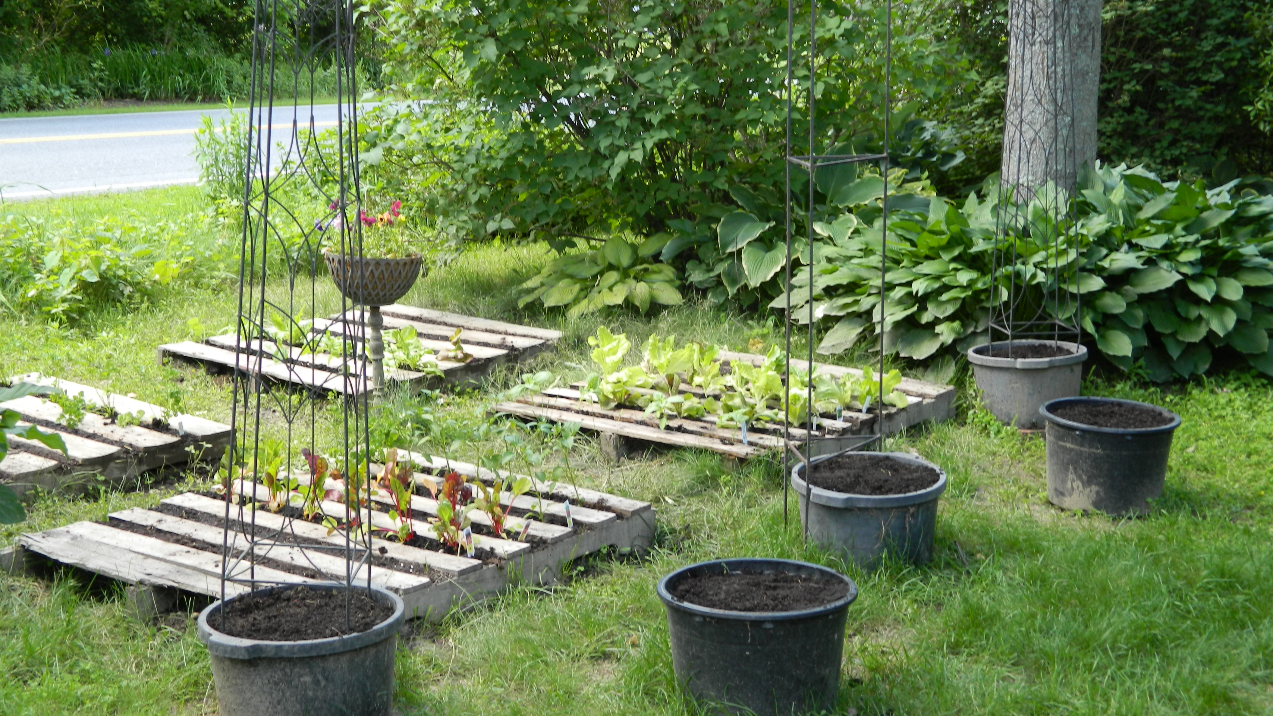 ... Been Planted With Pole Beans, Tomatoes And Cucumbers. We Are Pleased  With This System So Far And Look Forward To Our First Season With A Pallet  Garden.