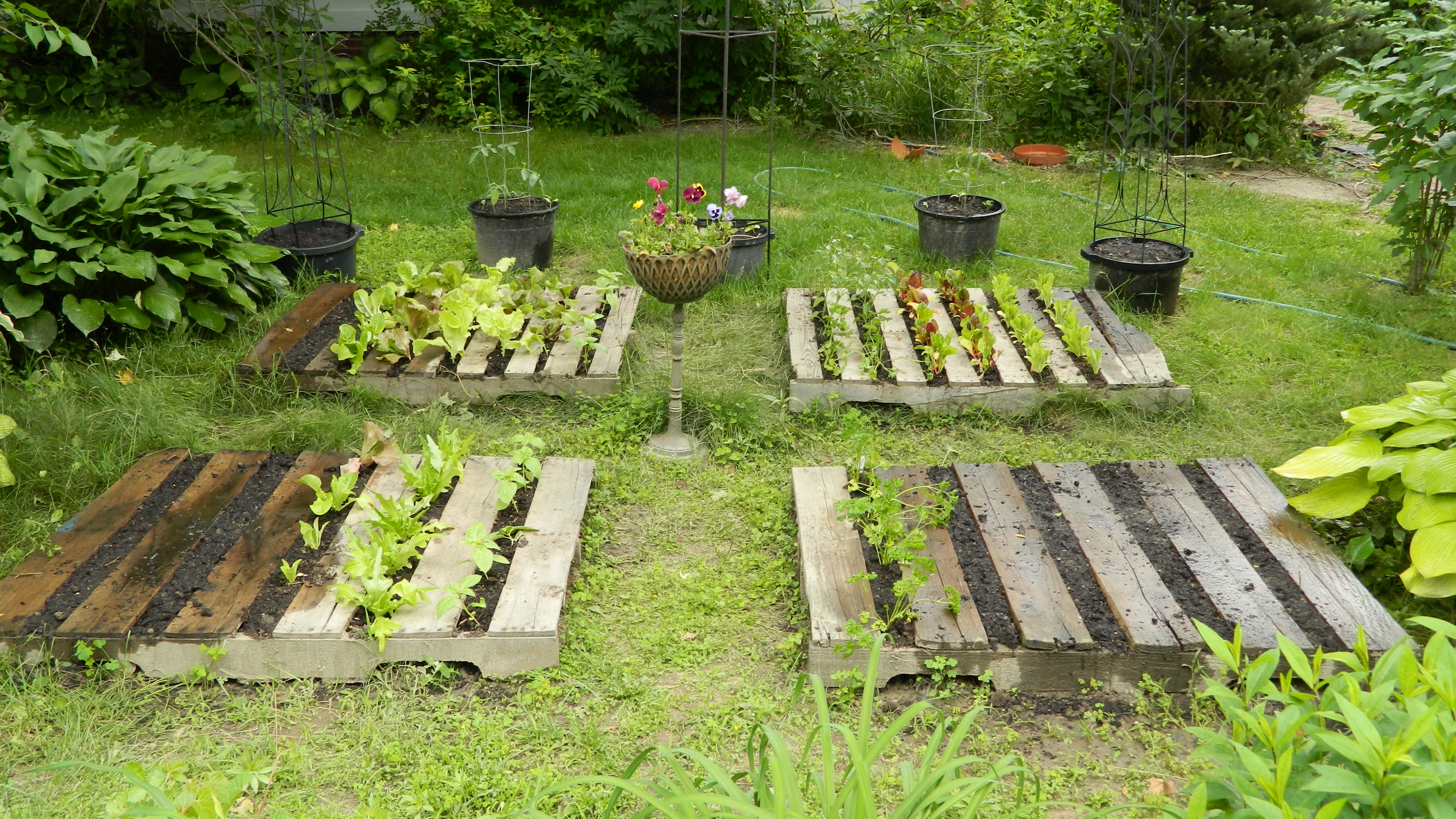 Attirant Back In April I Wrote An Entry That Included A Segment On Plans For  Creating A Pallet Garden. I Am A Strong Believer In Growing Food NOT Lawns.