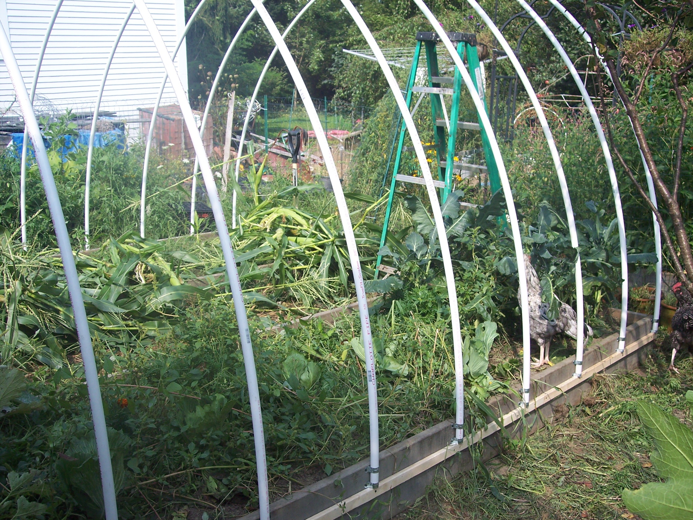 Raised Bed Greenhouse Plans Free - 1000+ ideas about Shed Plans on best greenhouse plans, cold frame greenhouse plans, solar greenhouse plans, greenhouse layout plans, gothic arch greenhouse plans, dome greenhouse plans, diy greenhouse plans, pvc greenhouse plans, back yard greenhouse plans, mini greenhouse plans, printable greenhouse plans, stone greenhouse plans, small greenhouse plans, in ground greenhouse plans, home greenhouse plans, gothic style greenhouse plans, vintage greenhouse plans, outdoor greenhouse plans, cheap greenhouse plans, garden greenhouse plans,