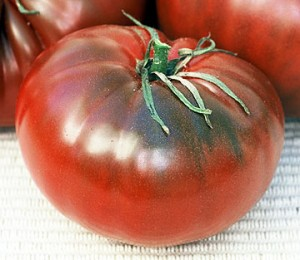 Tomato Cherokee Chocolate