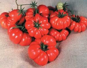 Tomato Costoluto Genovese