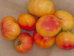 Tomato Marvel Stripe