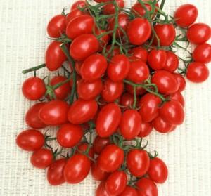 Tomato Rosalita