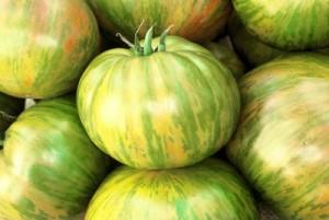 TomatoBigZebra