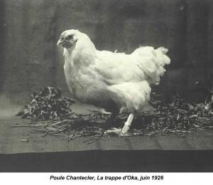 chantecler_hen_1926