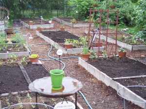 Raised Beds, Fall 2009